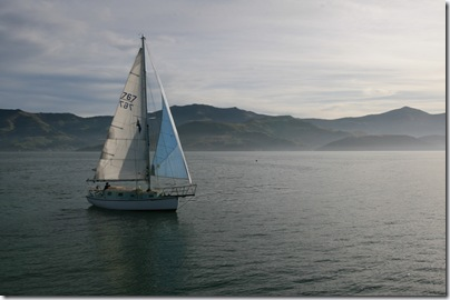 Sail boat in the bay