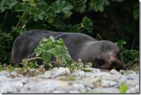 a resting seal