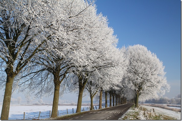 Snowy landscapes (main image)